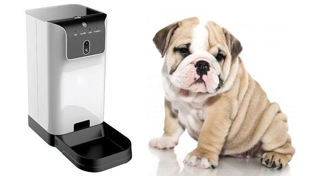 HD 애완 동물 공급기 카메라 (IP001)